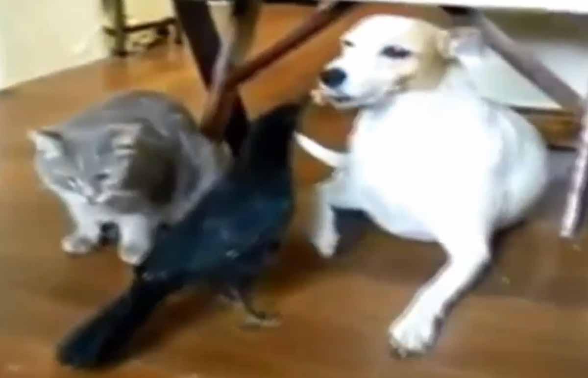 #animals#video#funny | Doggies | Funny animals, Animals ...