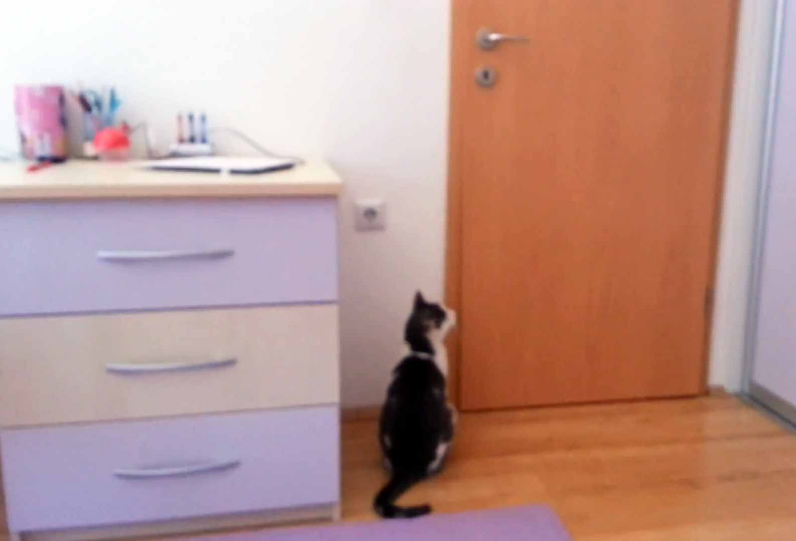 Cat Opens Five Doors To Go Outside. Flixxy Com Furniture   louisvuittonukonlinestore com