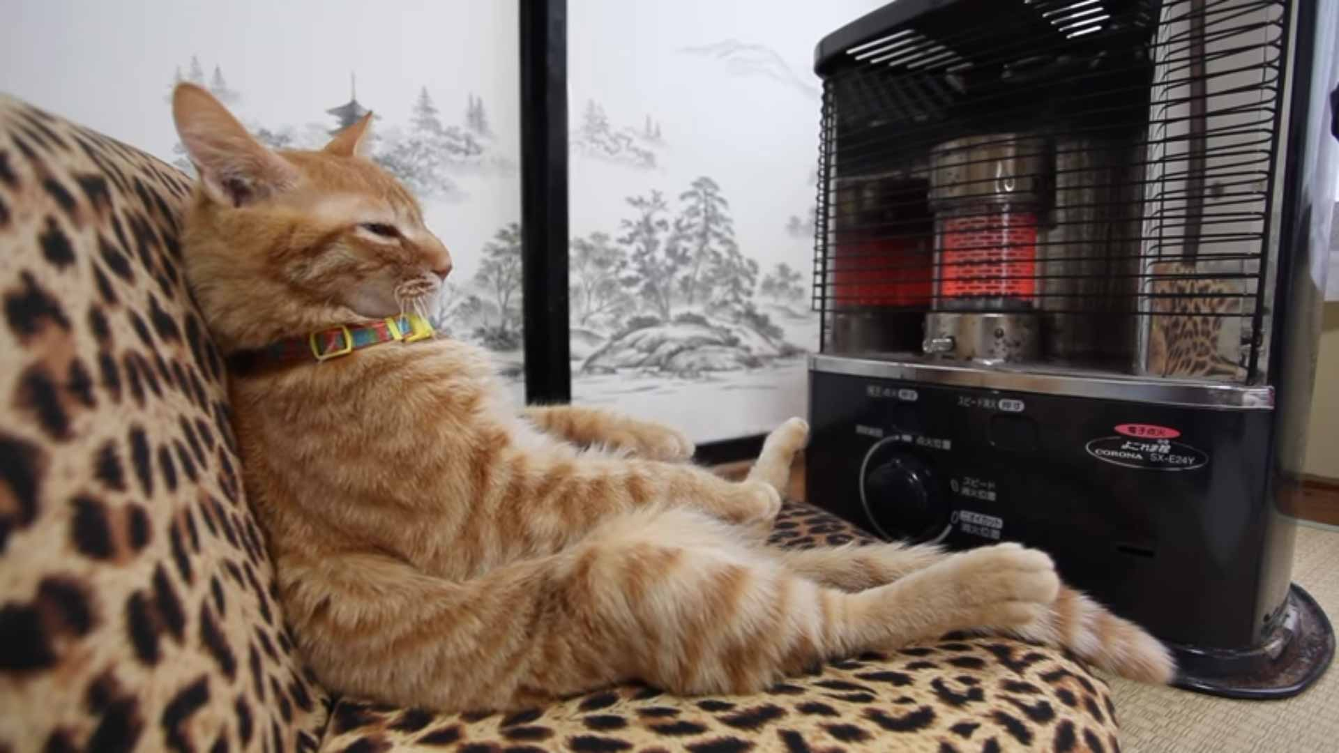 Cat Relaxing In Front Of The Fireplace