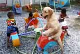 Dog On The Carousel With Children