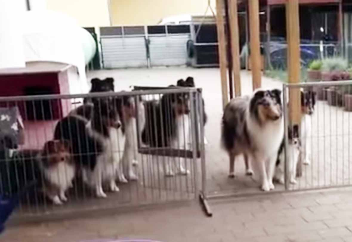 Dogs Waiting To Have Their Name Called