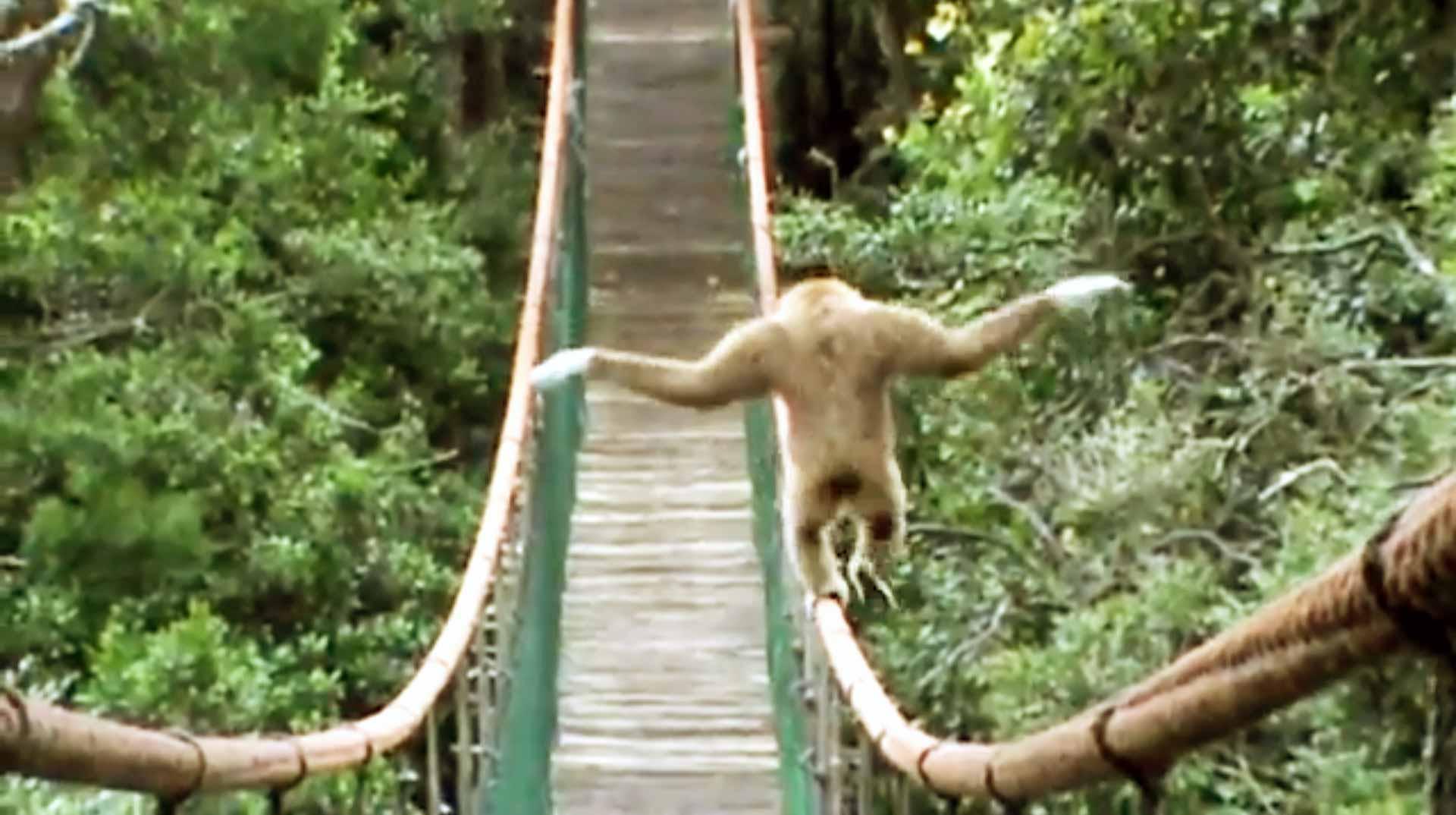 Gibbon Walks The Tight...