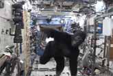 Gorilla At The International Space Station