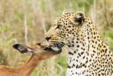 Predator And Prey Are Friends