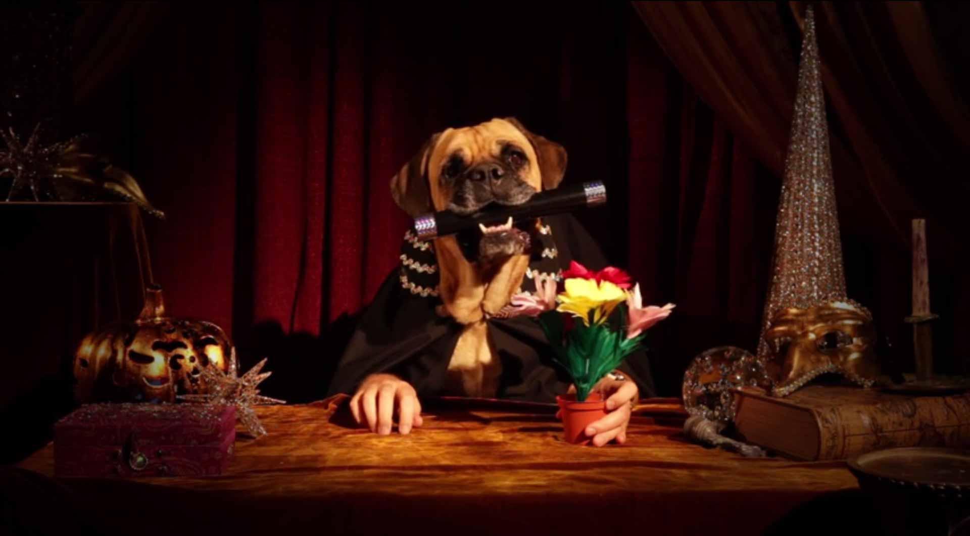 Magician Dog Treats