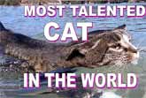 The World's Most Talented Cat Lives In Australia